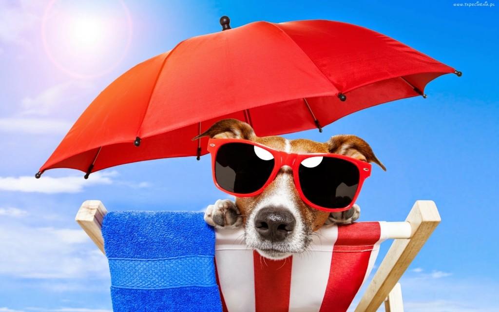 178685_pies_plaza_parasol_okulary